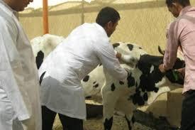 قوافل بيطرية وعلاجية وإرشادية بـ 4 قرى بالمنيا