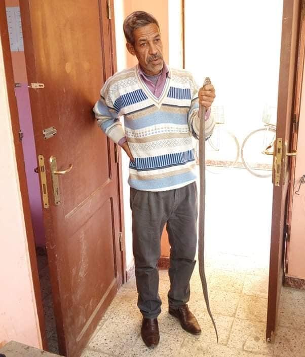 حكاية تكريم معلم ينقذ الطلبه من ثعبان الكوبرا بقنا